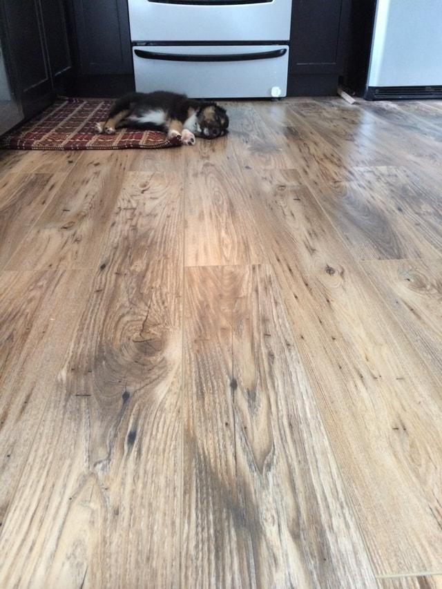 Petite Modern Life: Reclaimed Chestnut Laminate Floors