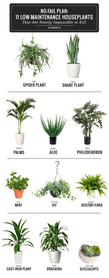 House plants inspiration petite modern life for Modern low maintenance plants