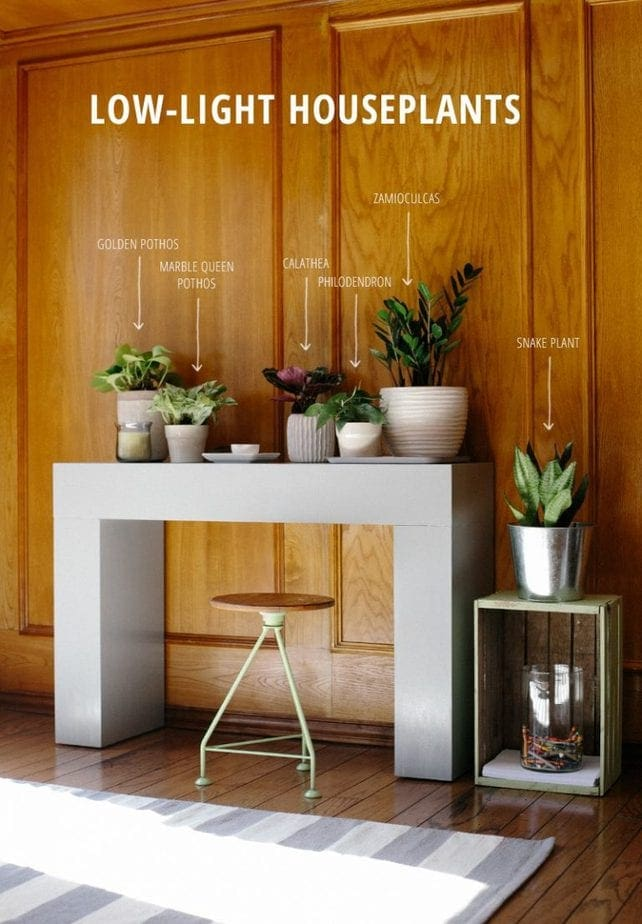 Petite modern life house plants inspiration petite modern life - House plants that grow in low light ...