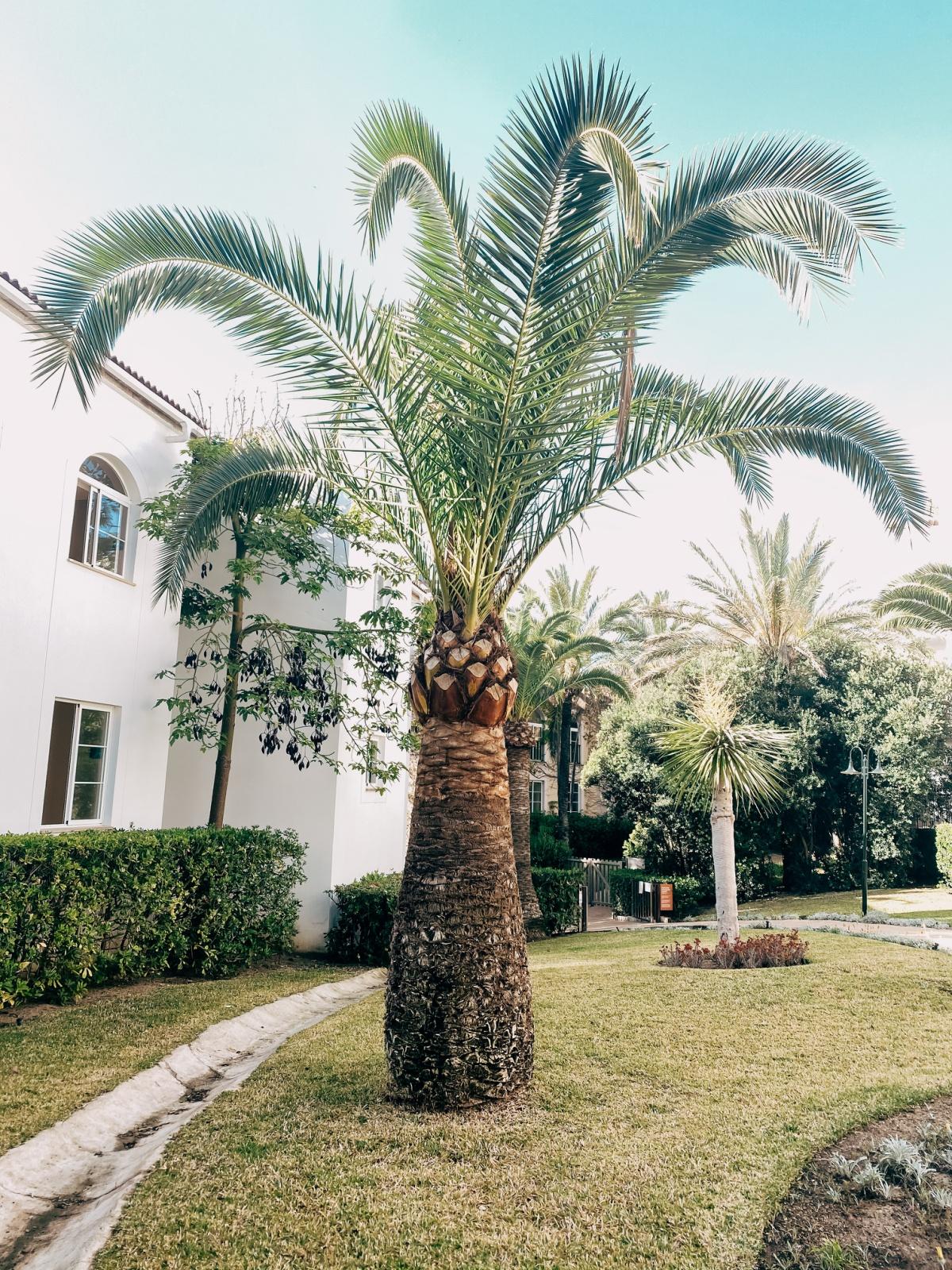 Viva Cala Mesquida Resort grounds